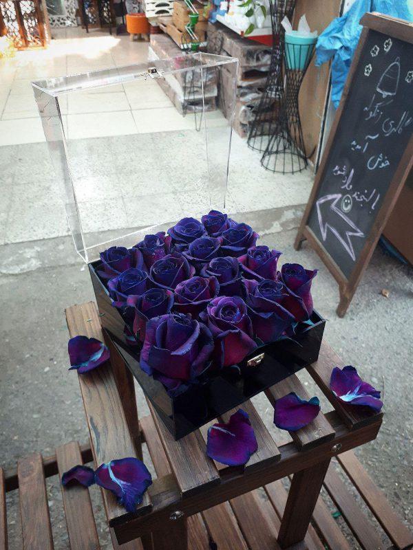 گل آسیه شماره 81 7