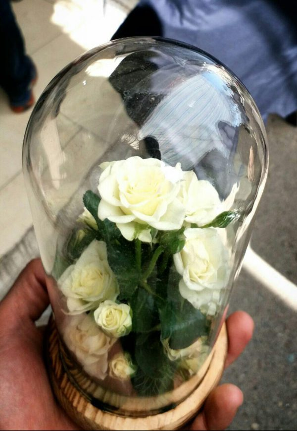 گل آراسته شماره 86 2