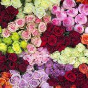 معانی رنگ گل های رز