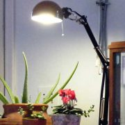 تاثیر گذاری نور مصنوعی در گیاهان