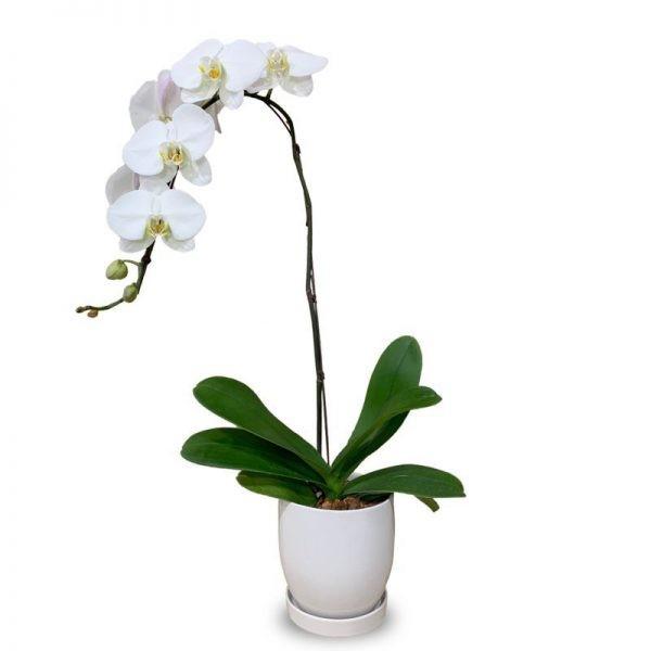سفارش آنلاین گلدان گل ارکیده
