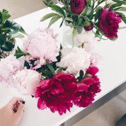 گل پیونی یا گل صد تومانی و بیشتر بشناسیم