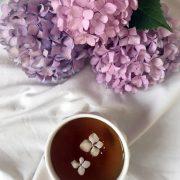همه چی در مورد گل هورتانسیا یا گل ادریسی